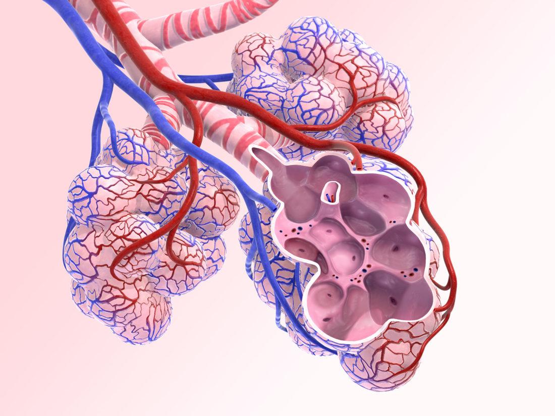 Alveoli Cross Section Akyu
